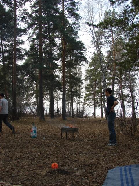 Недевственные леса