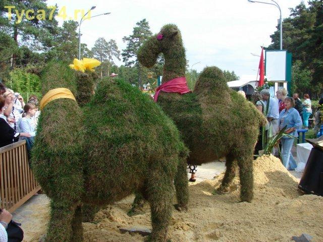 Вот такие вот верблюды :)