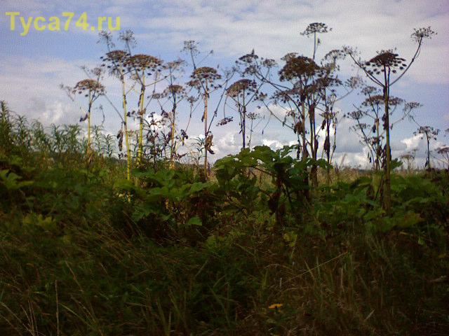 Чудо-трава