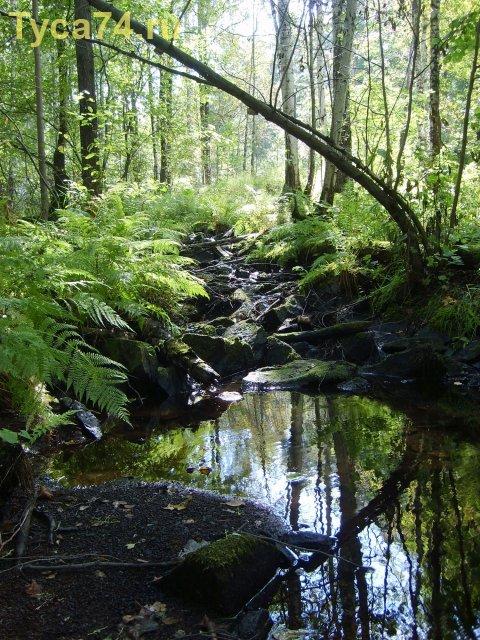 Лесной ручей (Ильменский заповедник)